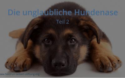 Hund rettet seinem Frauchen das Leben!