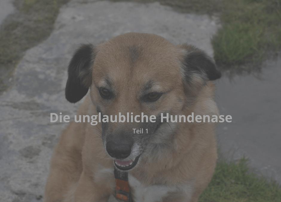 Die unglaubliche Hundenase 1