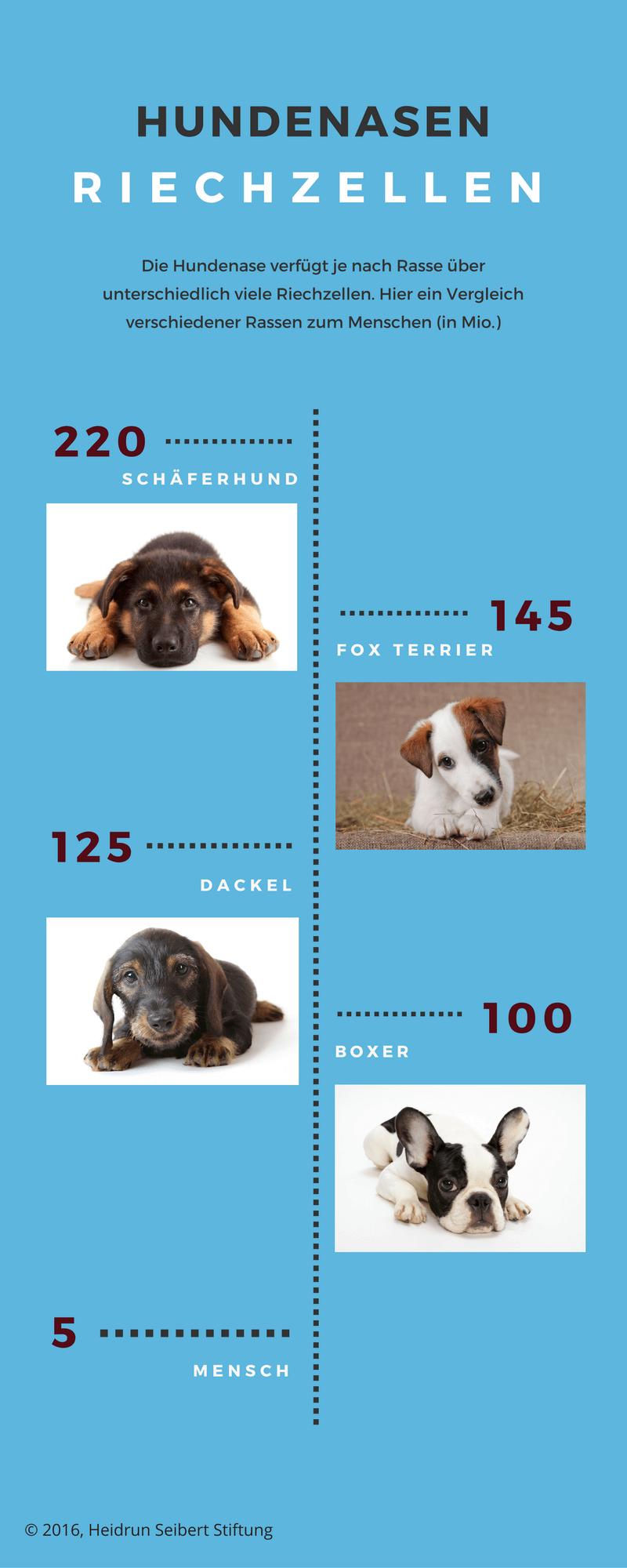 Hundenase: Die Riechzellen verschiedener Hunderassen im Vergleich zum Mensch